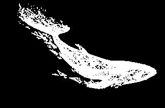 whale_white